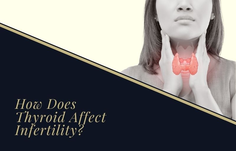 How Does Thyroid Affect Infertility?